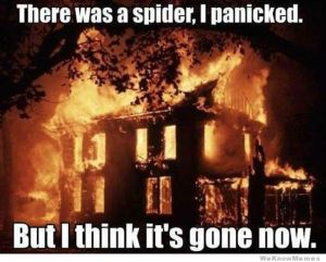 there-was-a-spider-i-panicked